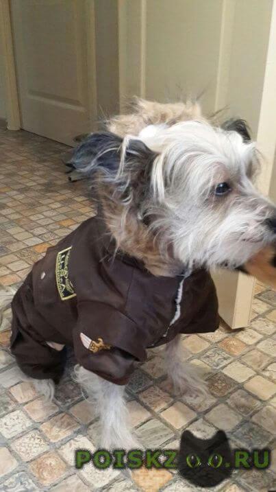Пропала собака кобель г.Сысерть