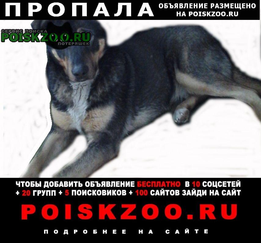 Пропала собака Улан-Удэ