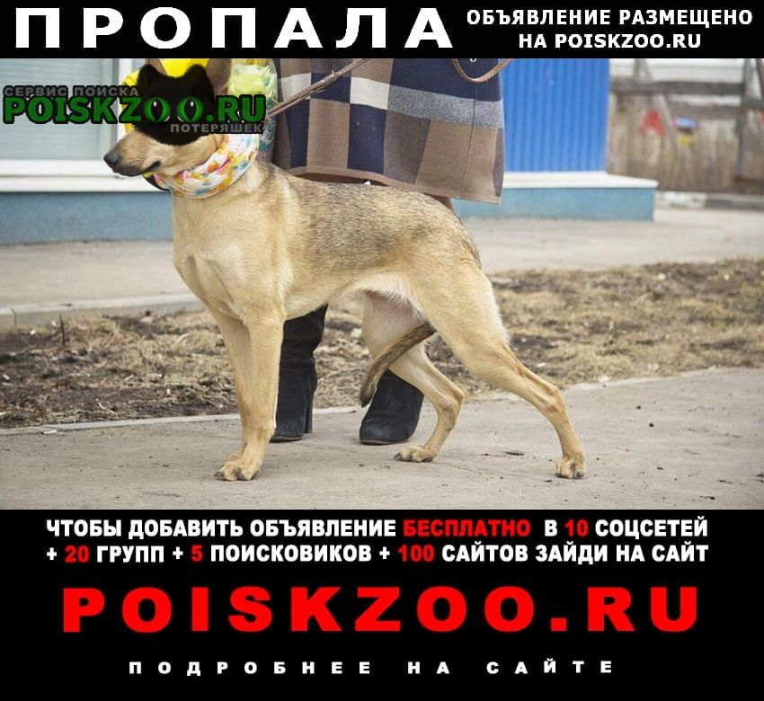 Москва Пропала собака зовут марта. метис