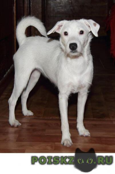 Пропала собака г.Сочи