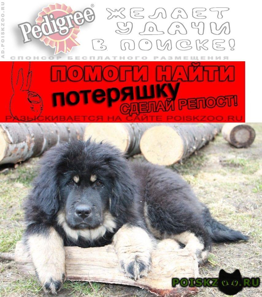 Пропала собака откликается на имя мишка г.Новоуральск