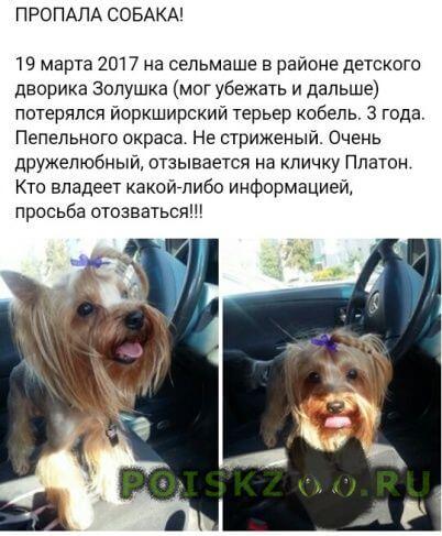 Пропала собака кобель г.Гомель