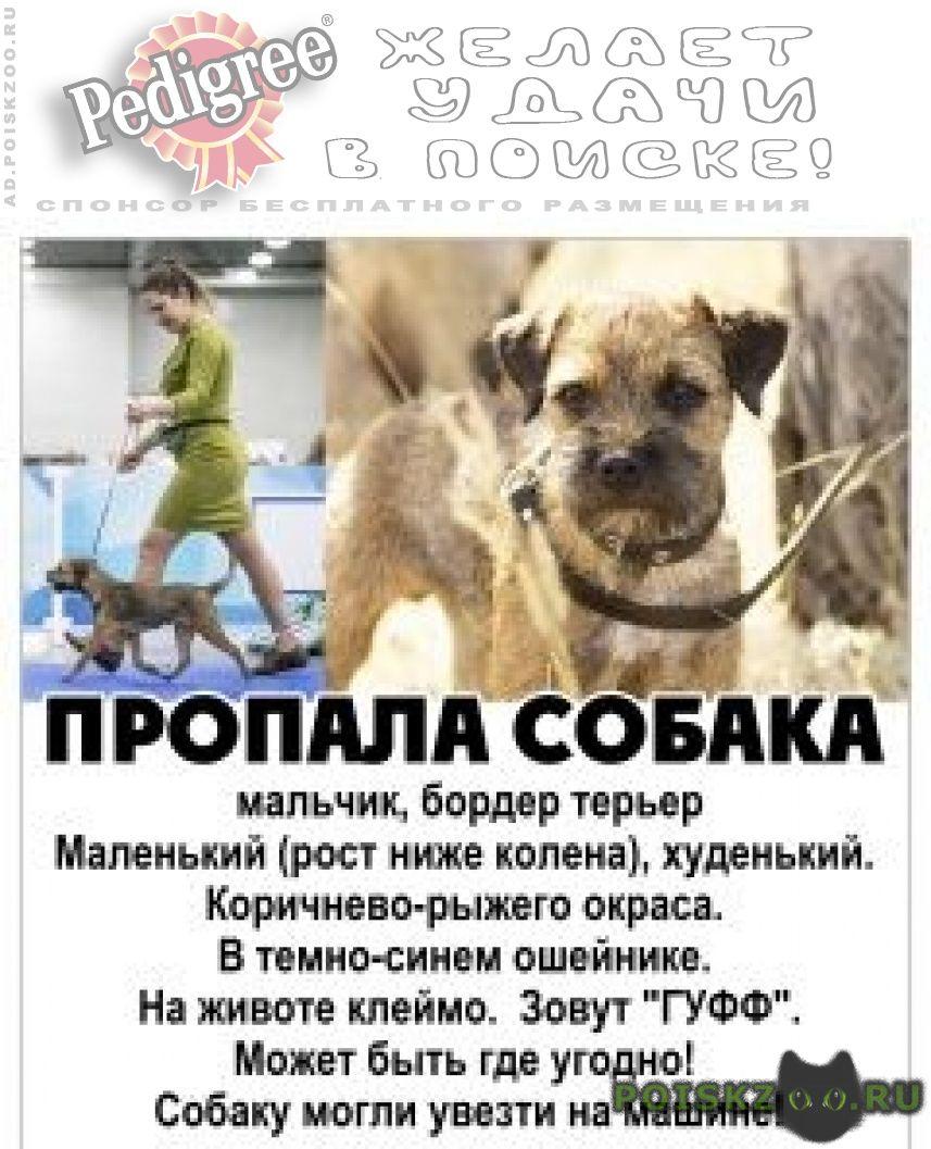 Пропала собака кобель   большое вознаграждение г.Волгоград