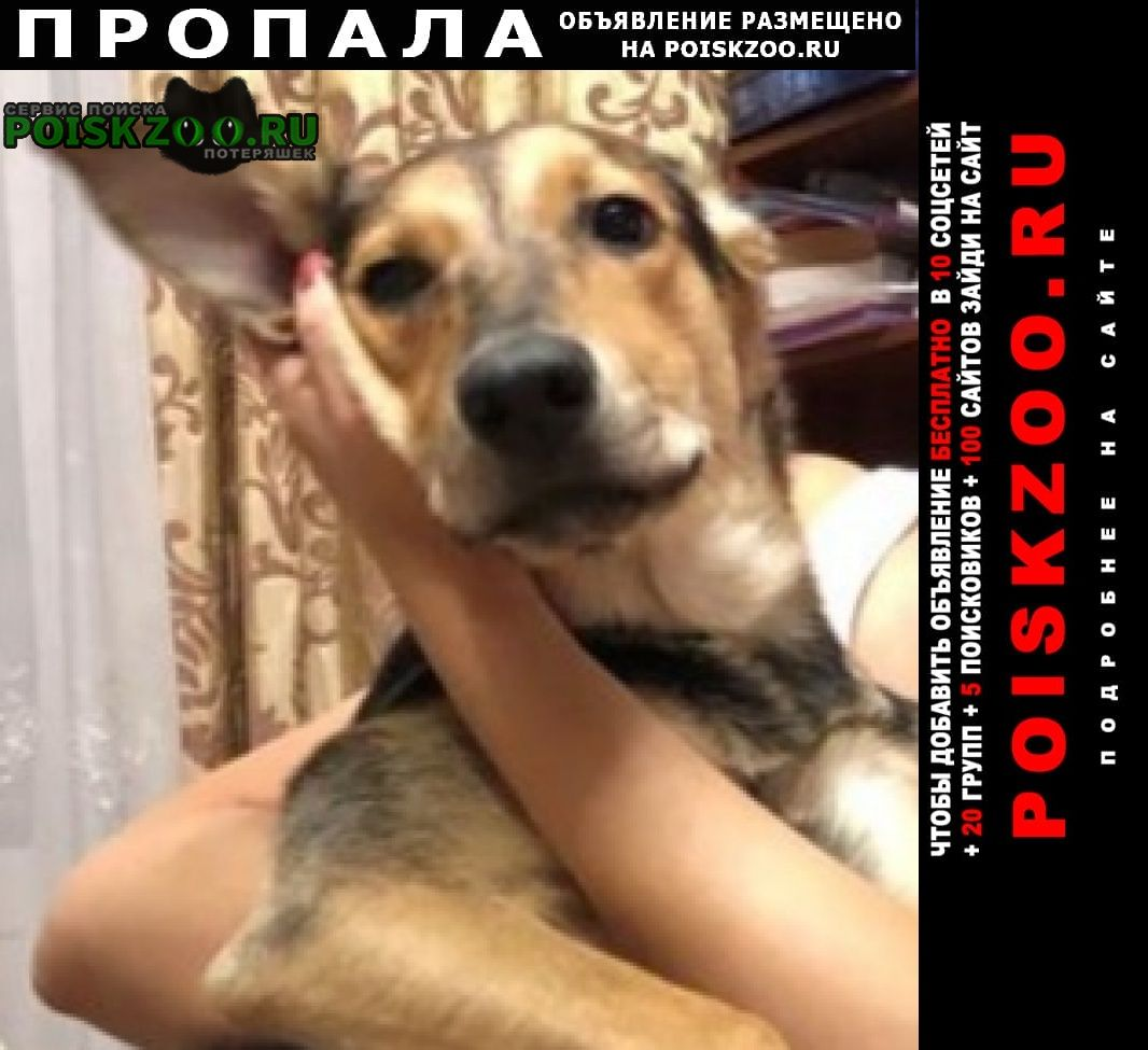 Пропала собака, дворняга. Москва