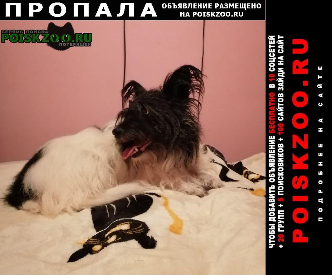 Пропала собака в районе черкизовской Москва