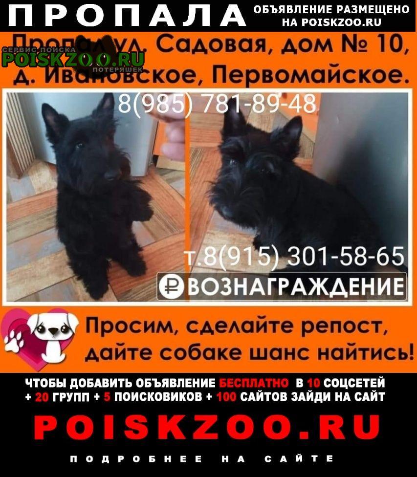 Москва Пропала собака кобель скотч терьер