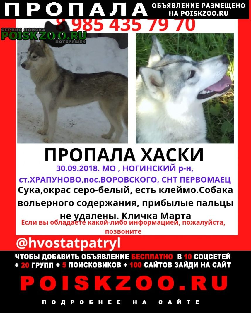 Москва Пропала собака помогите найти марту