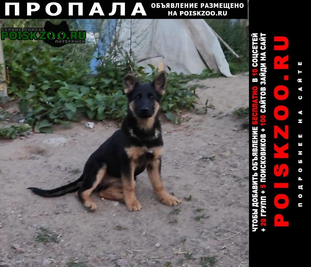 Зеленогорск (Ленинградская обл.) Пропала собака помогите найти щенка