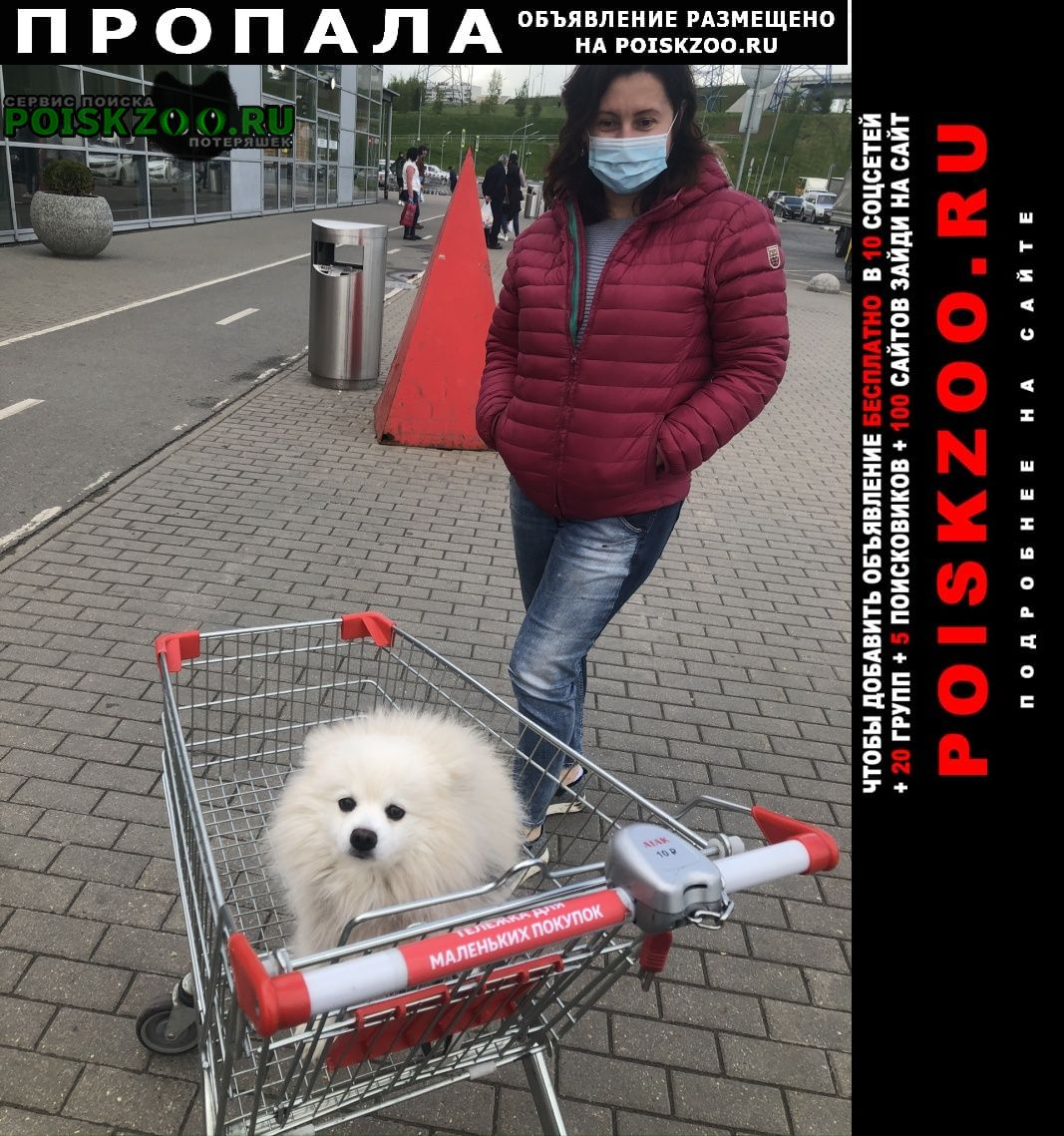 Пропала собака кобель немецкий шпиц Москва