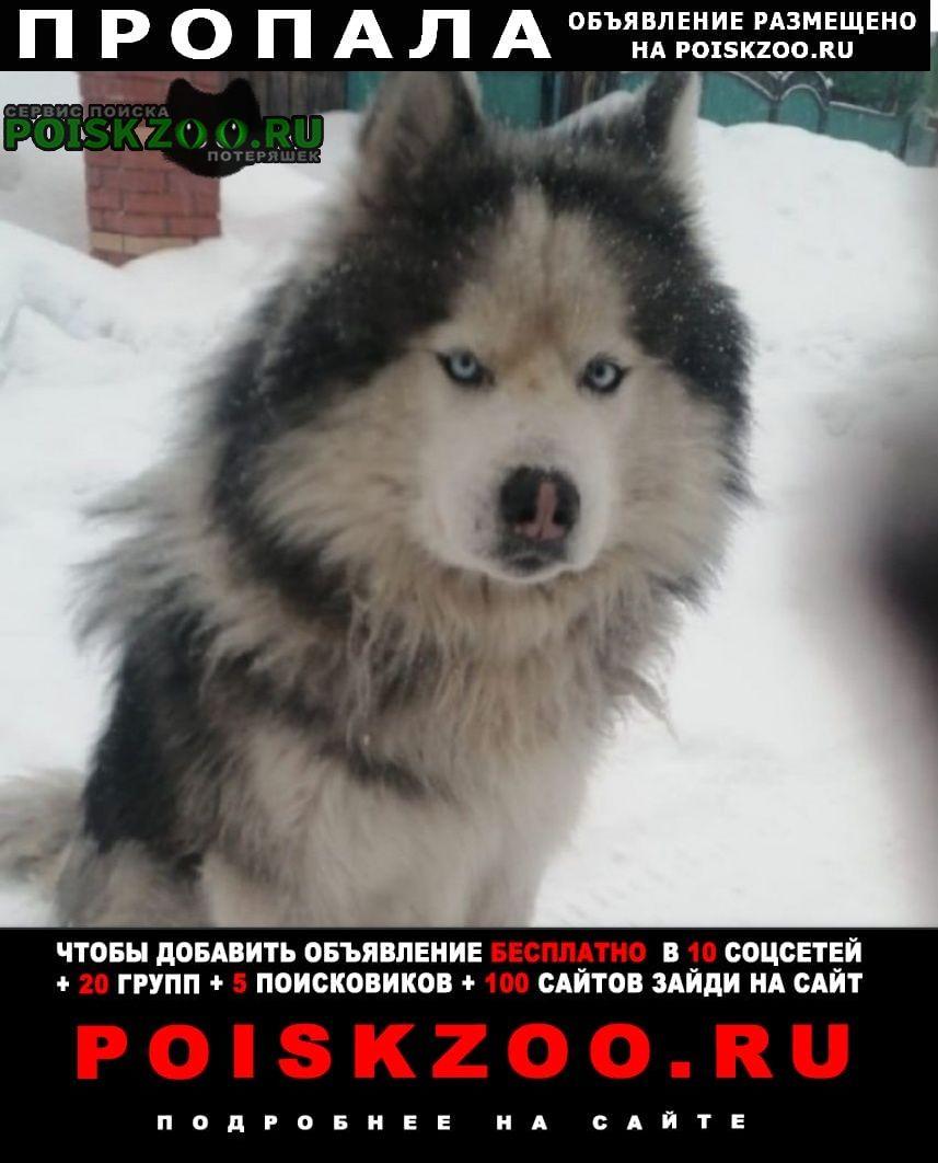 Пропала собака кобель Тайшет