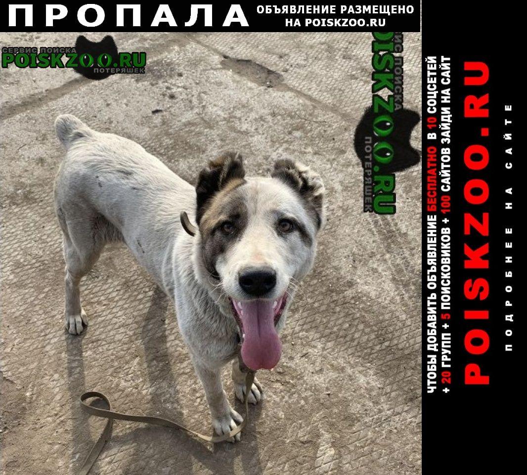 Пропала собака, сао, умка. г.Санкт-Петербург