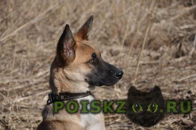 Пропала собака кобель Печоры