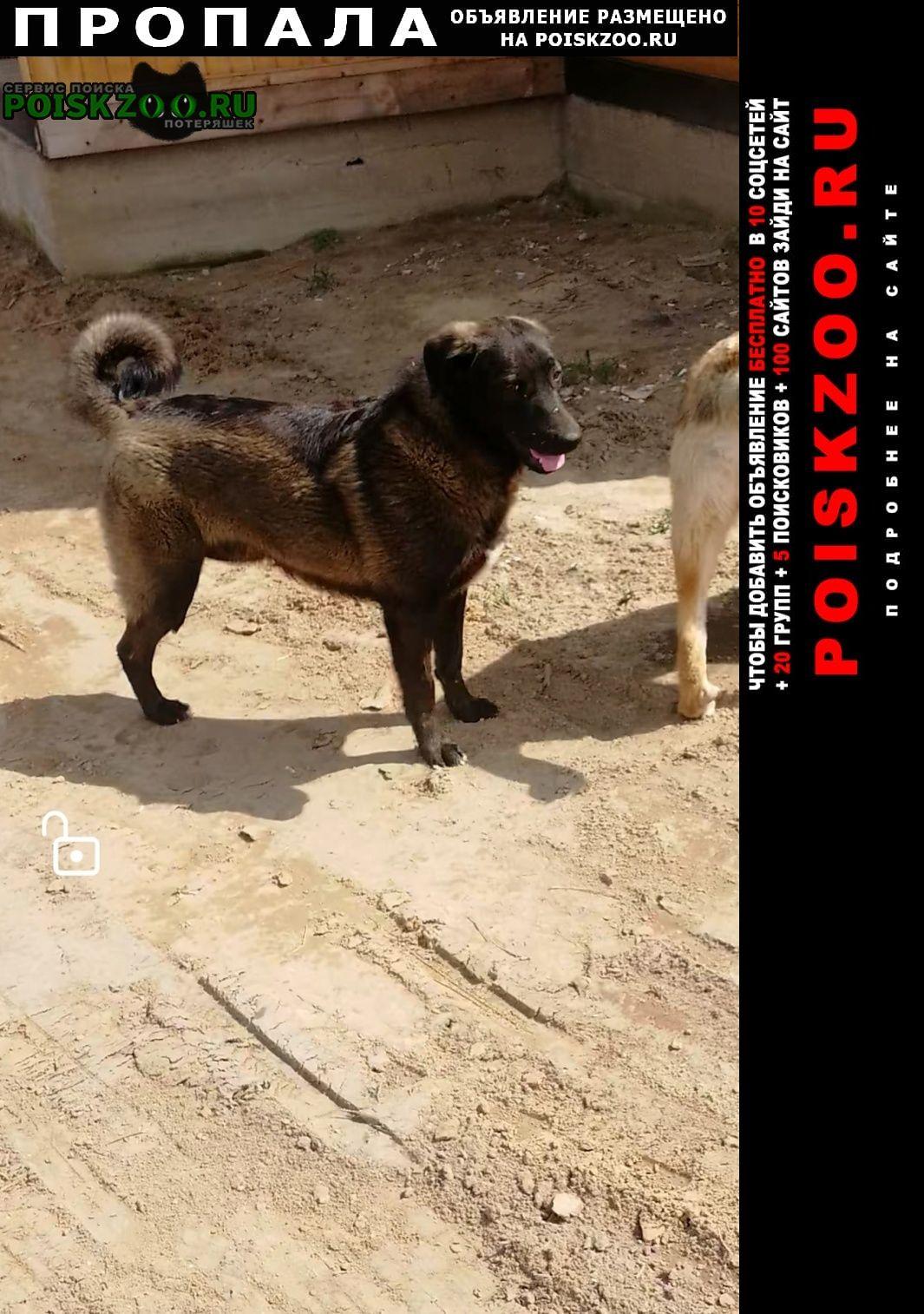 Пропала собака Раменское