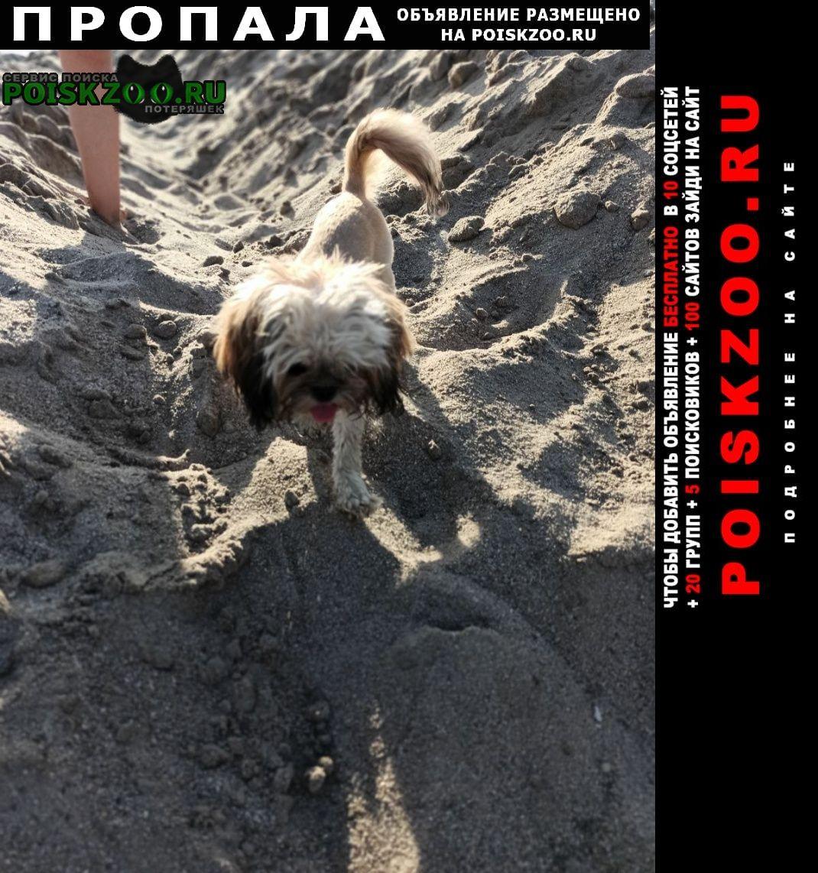 Ярославль Пропала собака