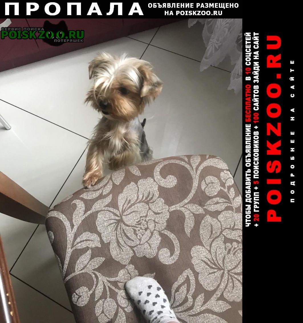 Пропала собака Калининград (Кенигсберг)