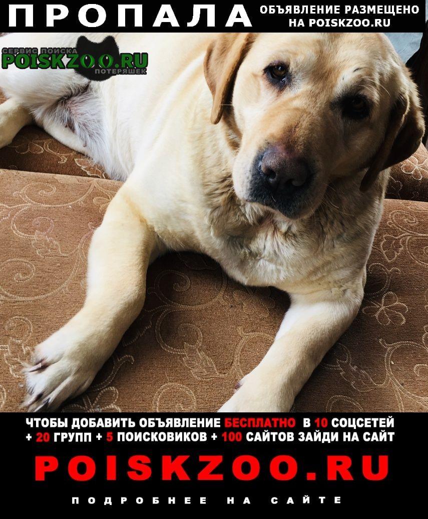 Пропала собака г.Кашары