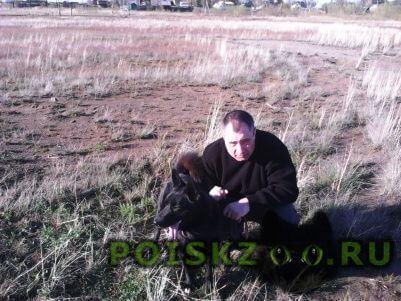 Пропала собака кобель лайка чёрного окраса г.Братск
