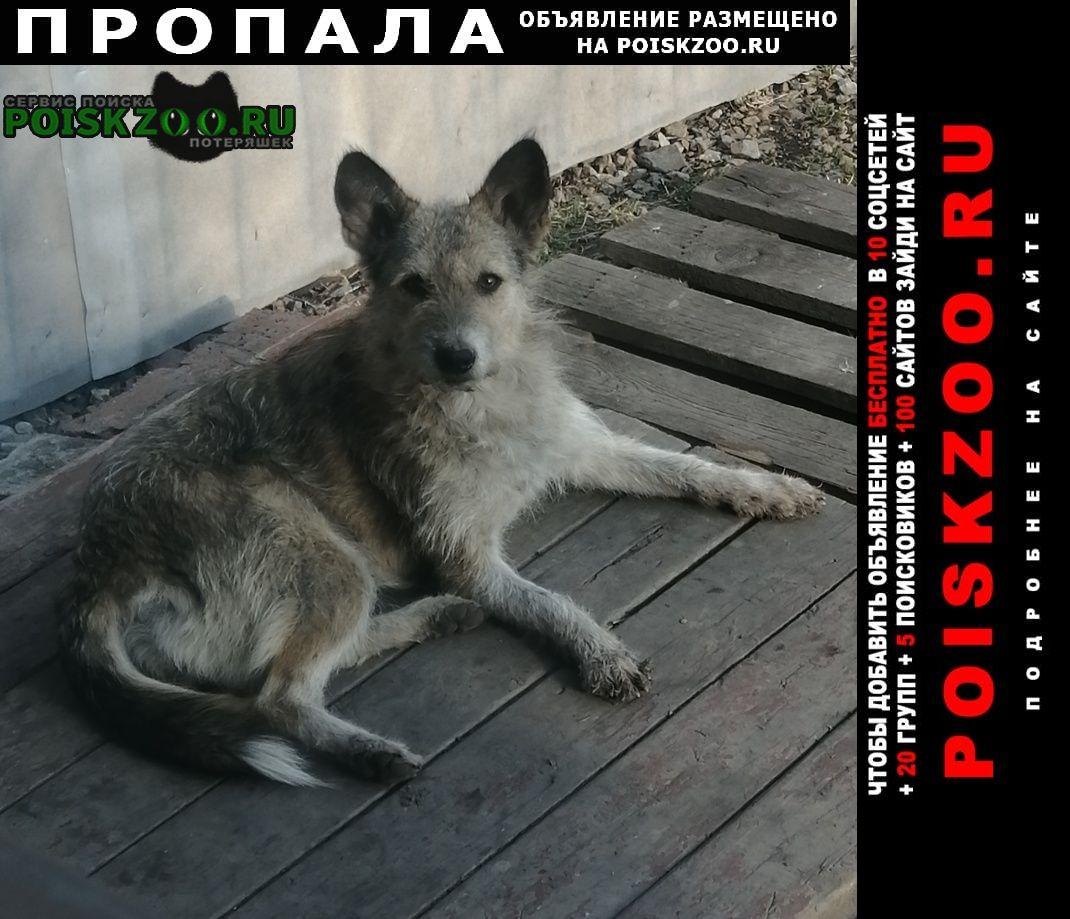 Пропала собака Анжеро-Судженск