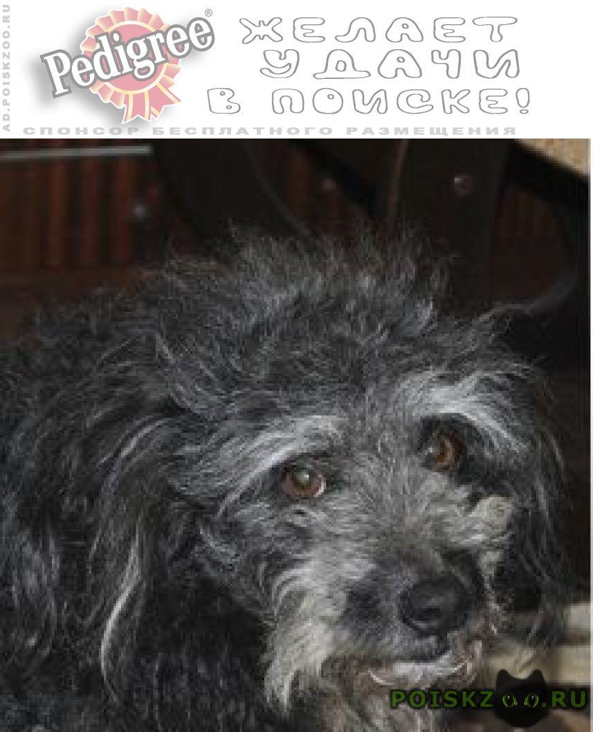 Пропала собака кобель г.Великий Новгород (Новгород)