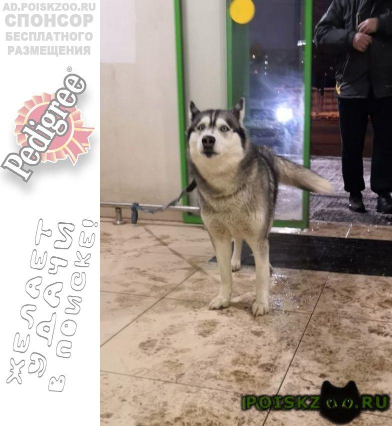 Пропала собака помогите вернуть домой  г.Нарофоминск
