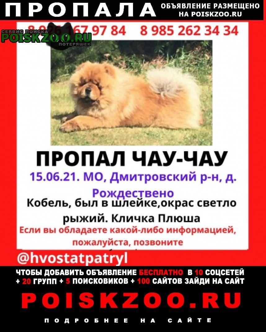 Пропала собака кобель чау-чау Икша