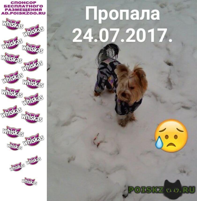 Пропала собака помогите найти пожалуйста г.Новоуральск