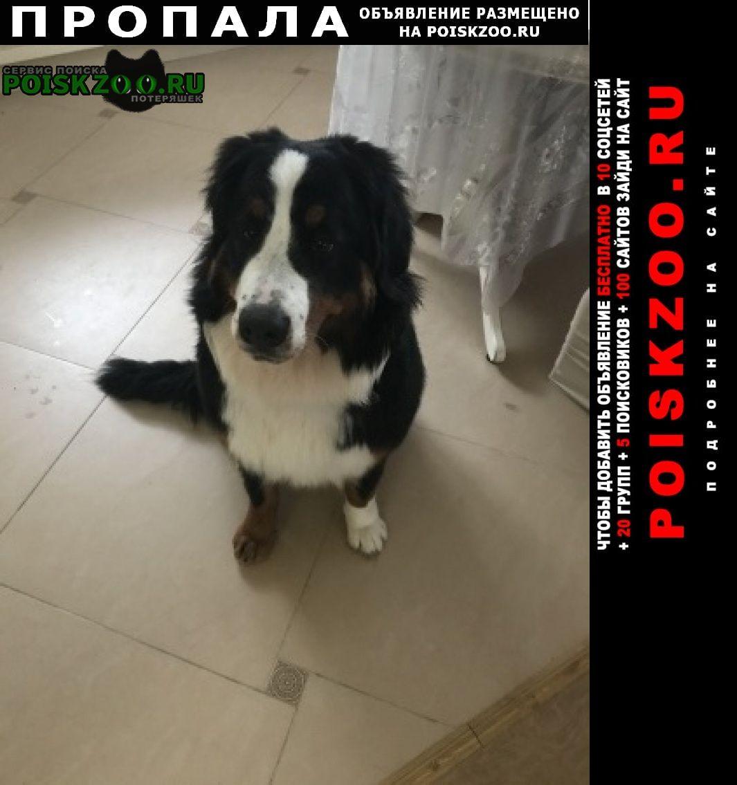 Пропала собака наша любимица Электроугли