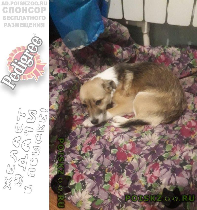 Пропала собака кобель г.Балашов