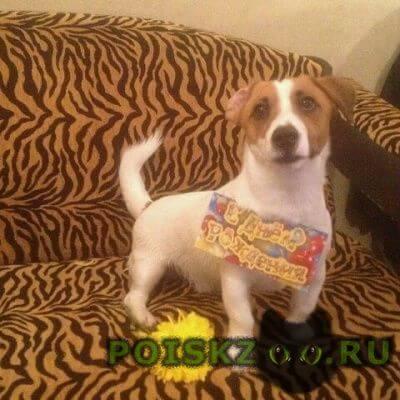 Пропала собака кобель г.Динская