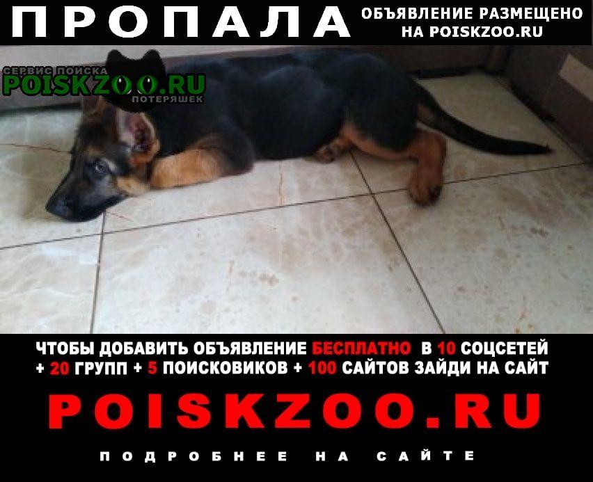 Динская Пропала собака кобель щенок, немецкая овчарка, возраст 3 мес.