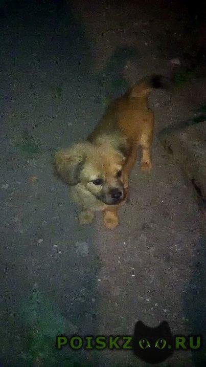 Пропала собака кобель г.Саратов