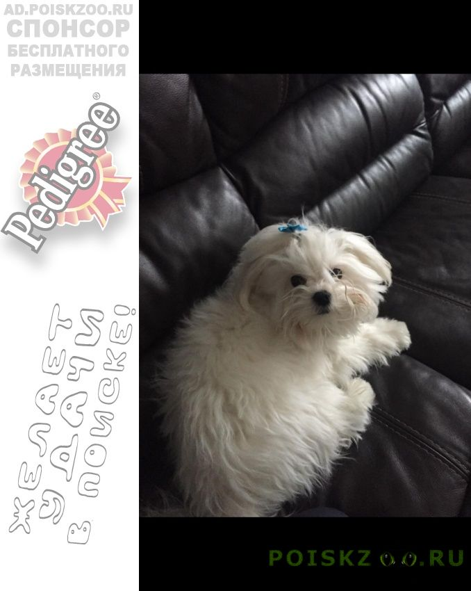 Пропала собака кобель г.Иваново