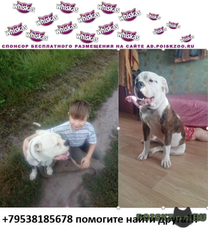 Пропала собака кобель г.Орел