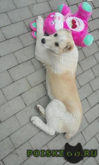 Пропала собака кобель г.Минеральные Воды