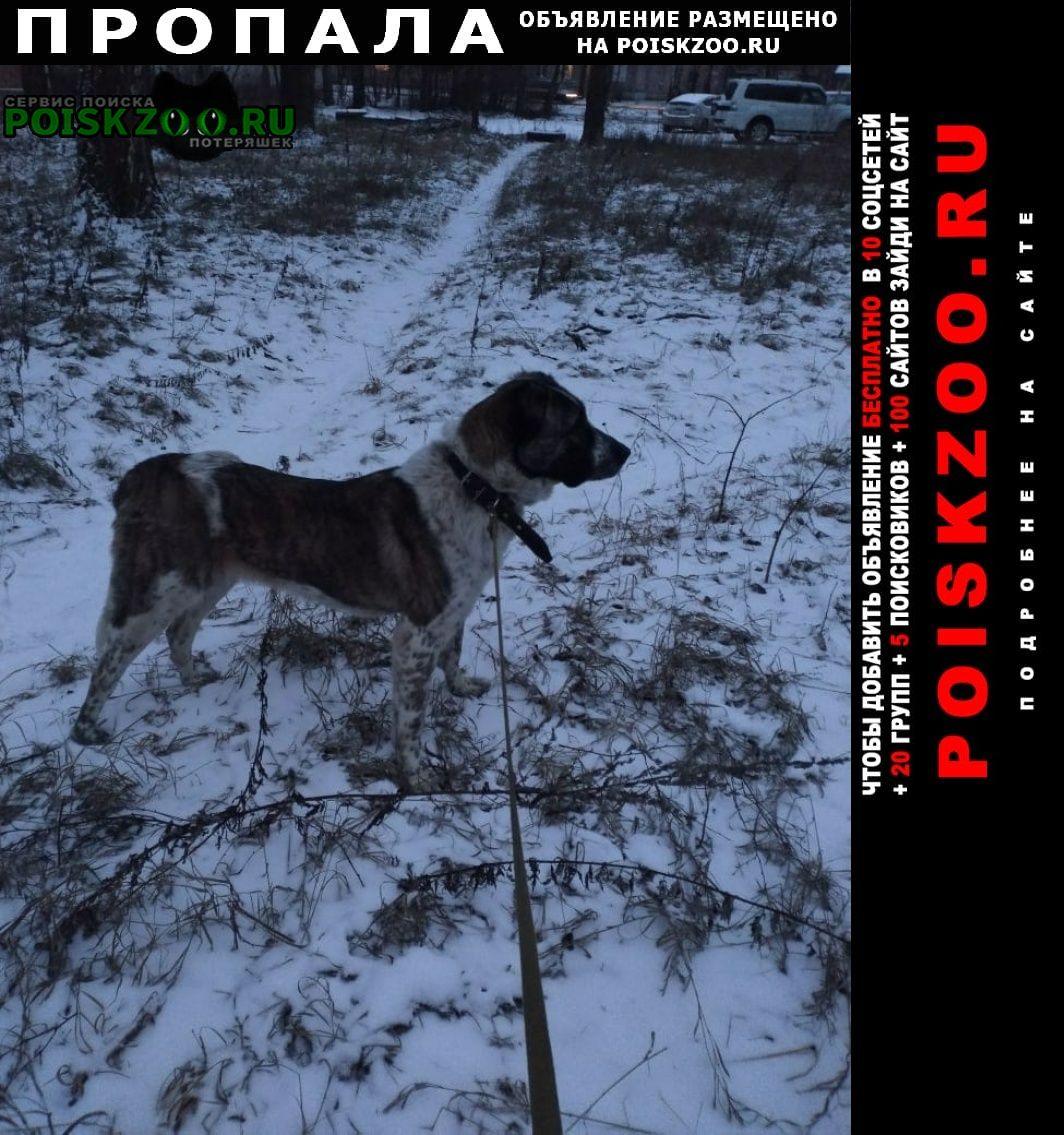 Пропала собака Оленино
