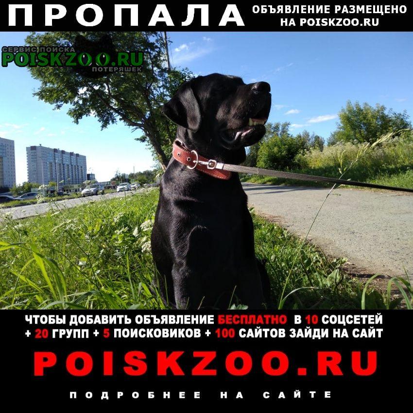 Пропала собака кобель Березовский (Свердловская обл.)