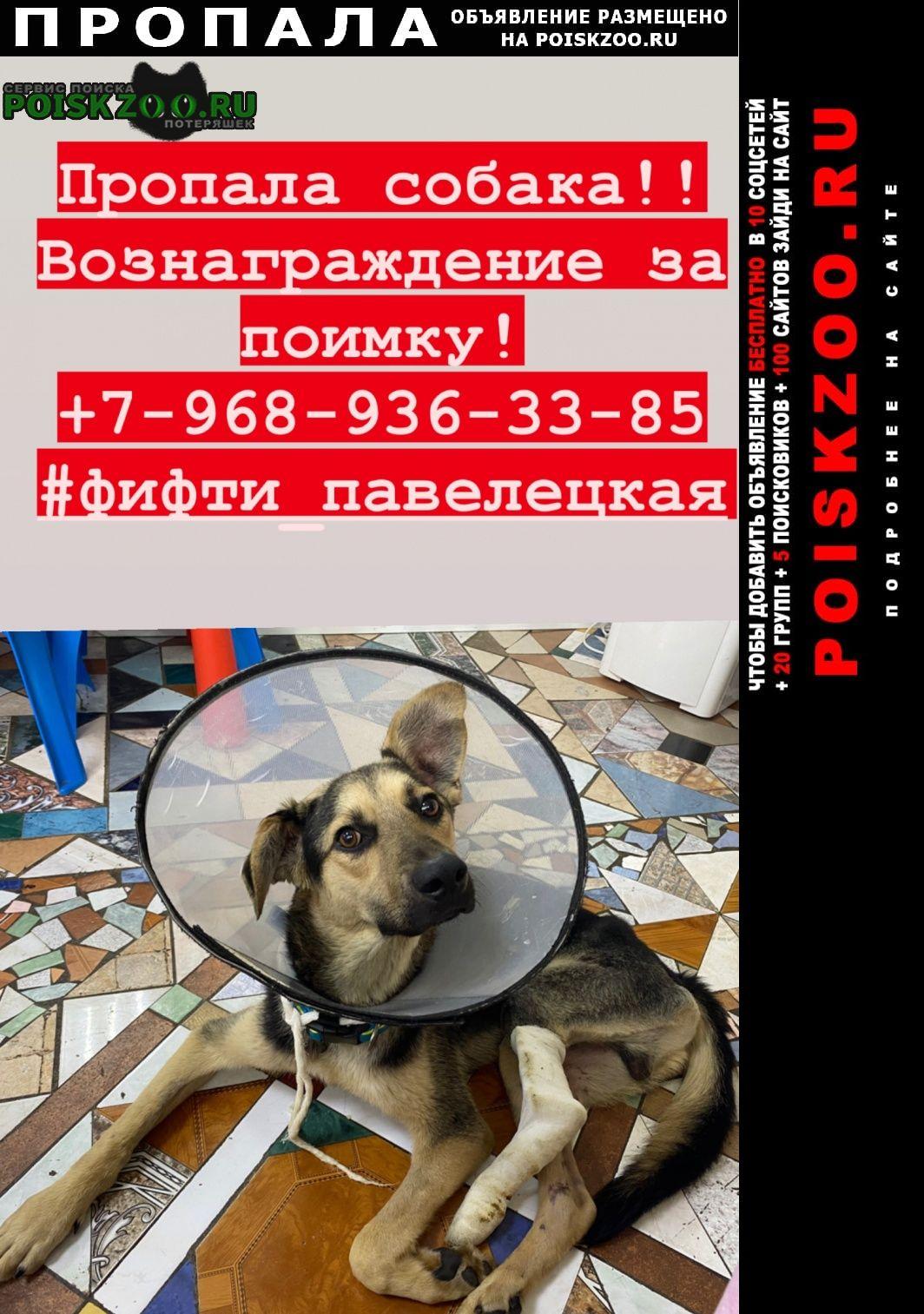 Пропала собака с поломанной лапой Ногинск