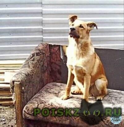 Пропала собака кобель друг и любимец семьи г.Новосибирск