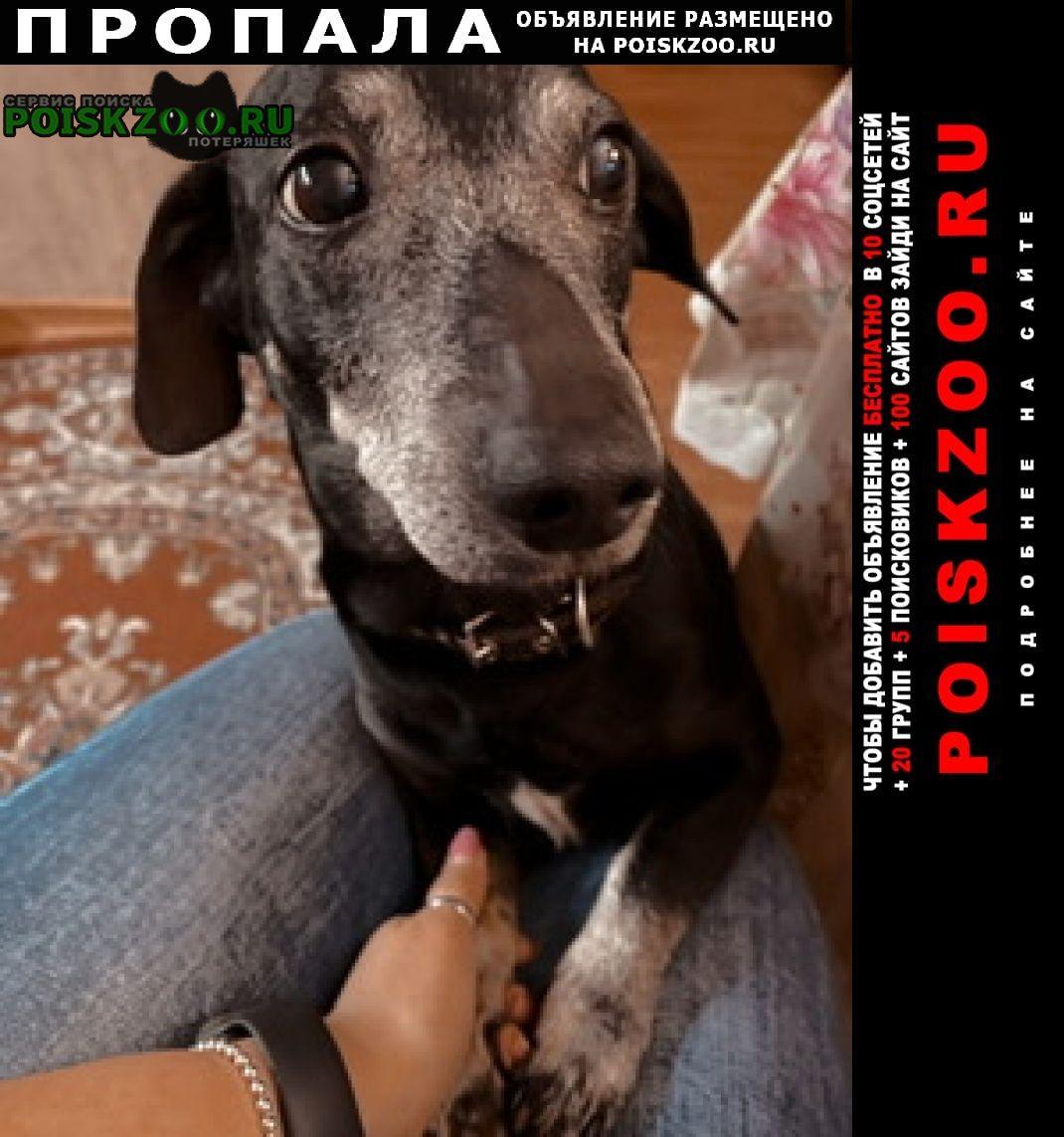 Пропала собака кобель (село бужаниново) Сергиев Посад
