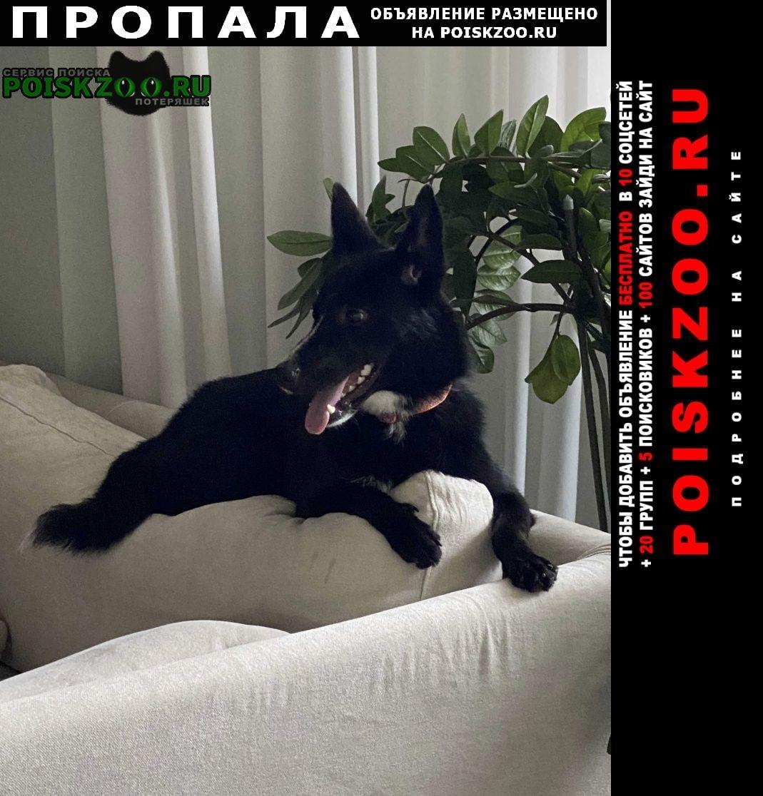 Пропала собака Вороново