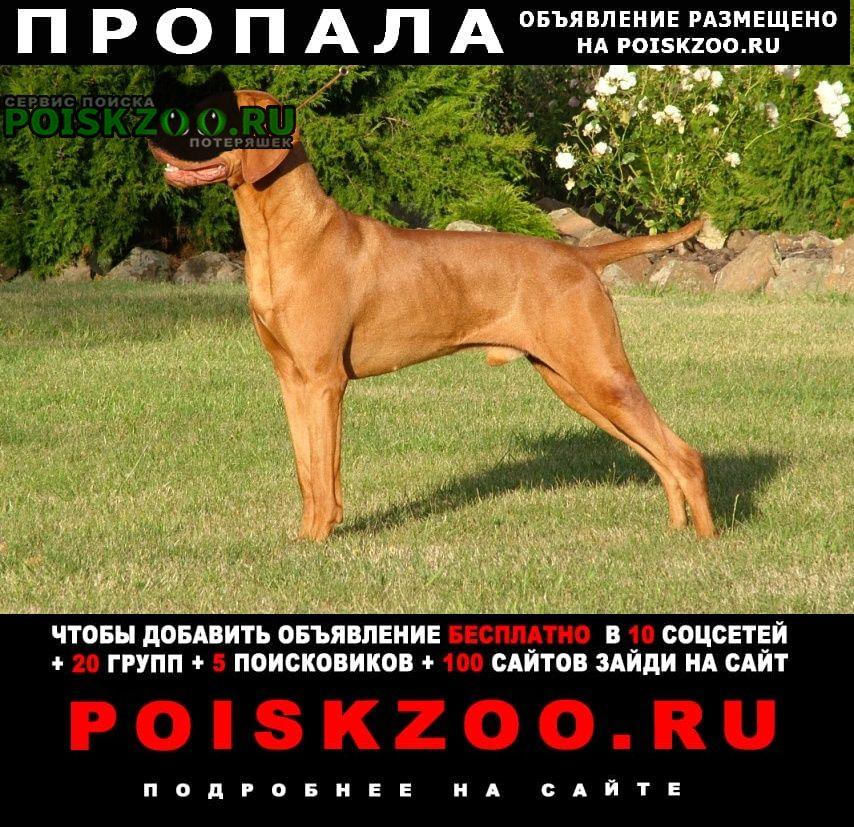 Пропала собака Гагарин