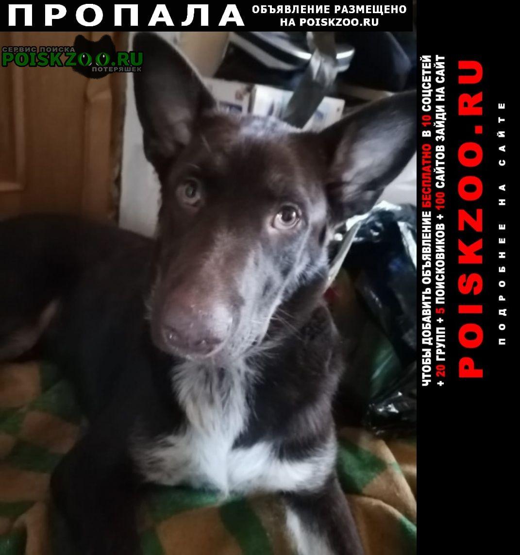 Пропала собака кобель помогите пёс джек Южно-Сахалинск