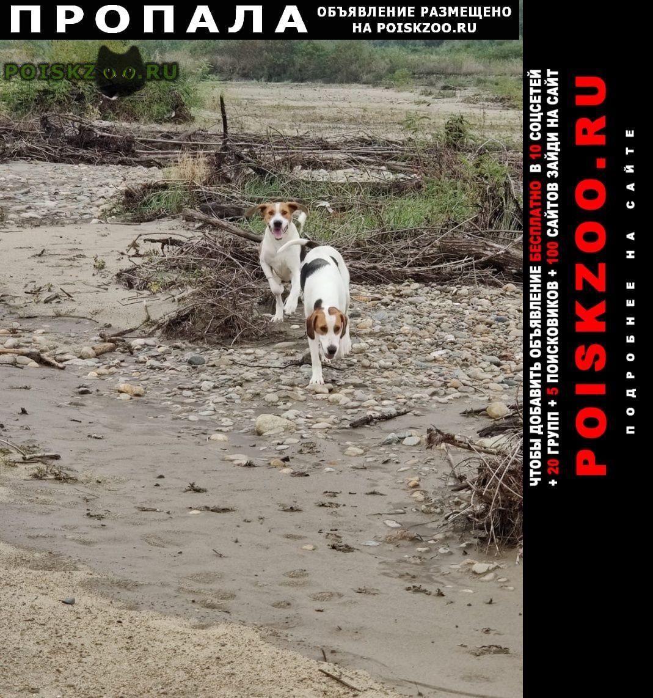 Пропала собака г.Курганинск