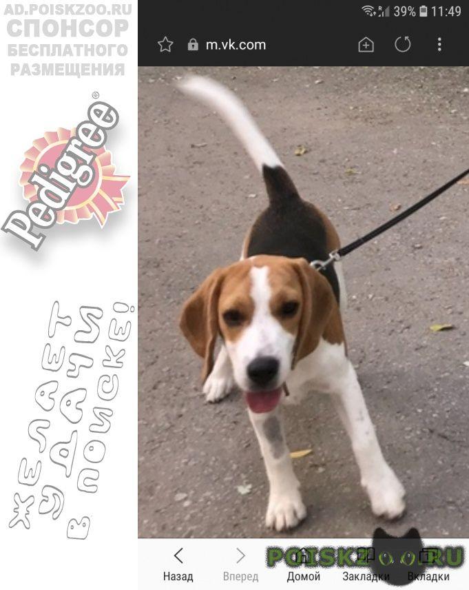 Пропала собака вознаграждение г.Феодосия