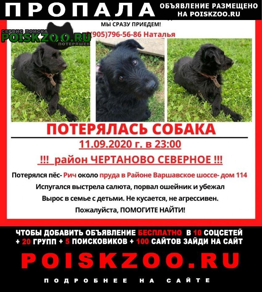 Пропала собака окрас- полностью черныц Москва
