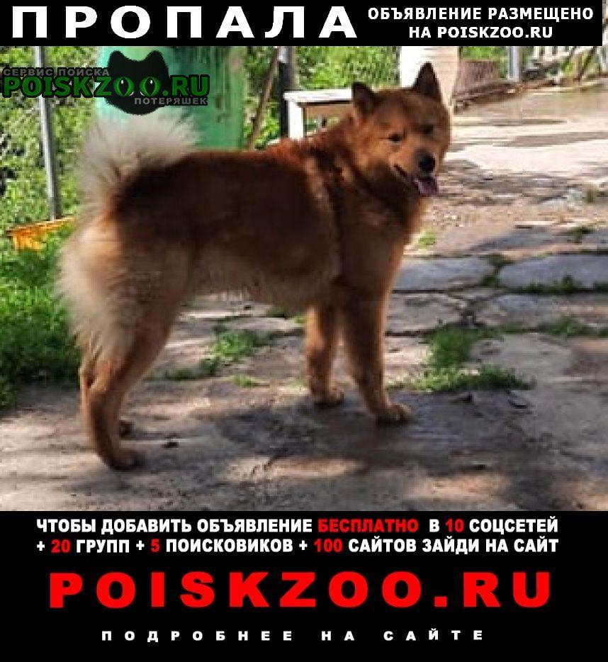 Пропала собака Находка (Приморский край)