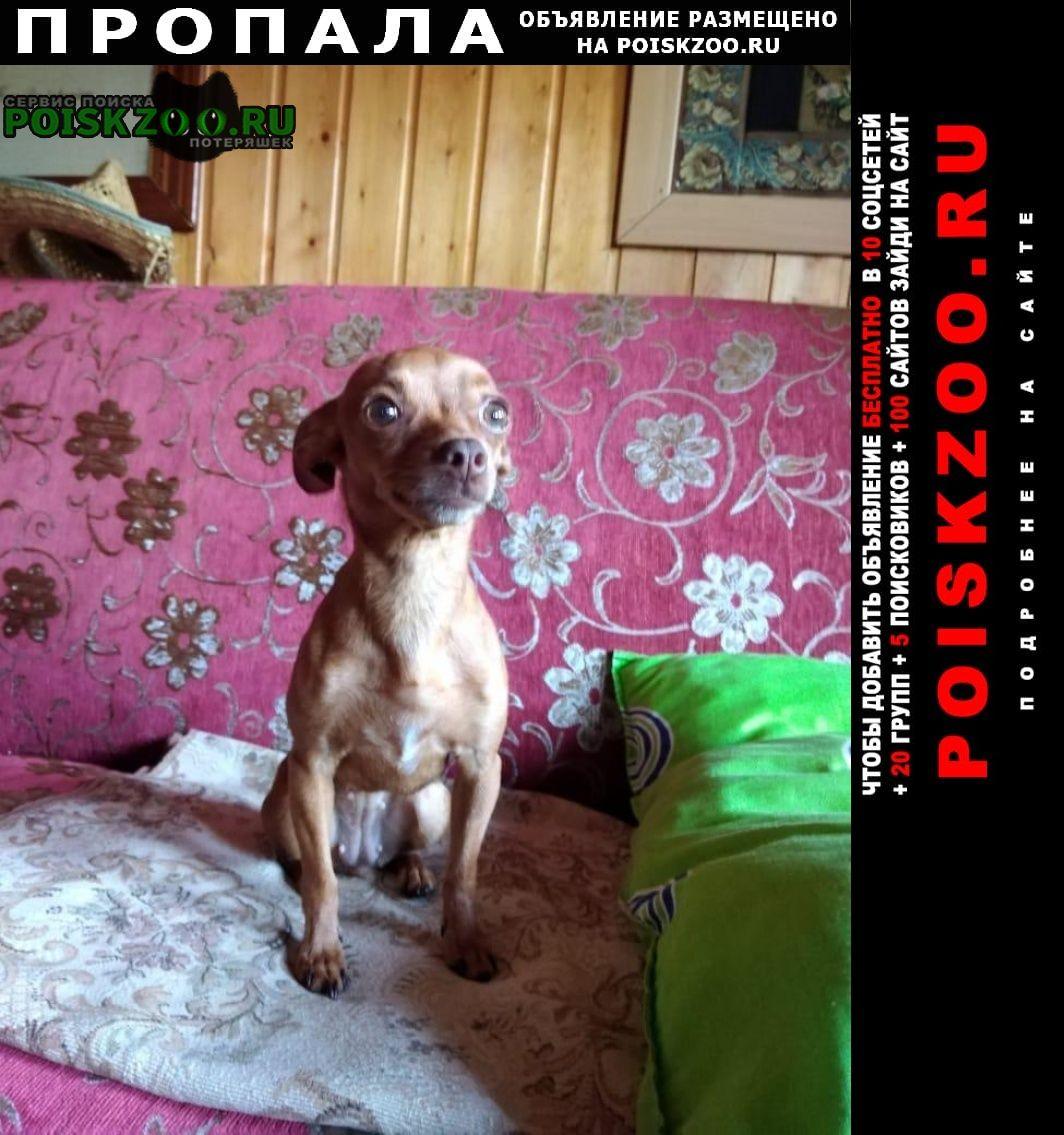 Пропала собака той-терьер Москва