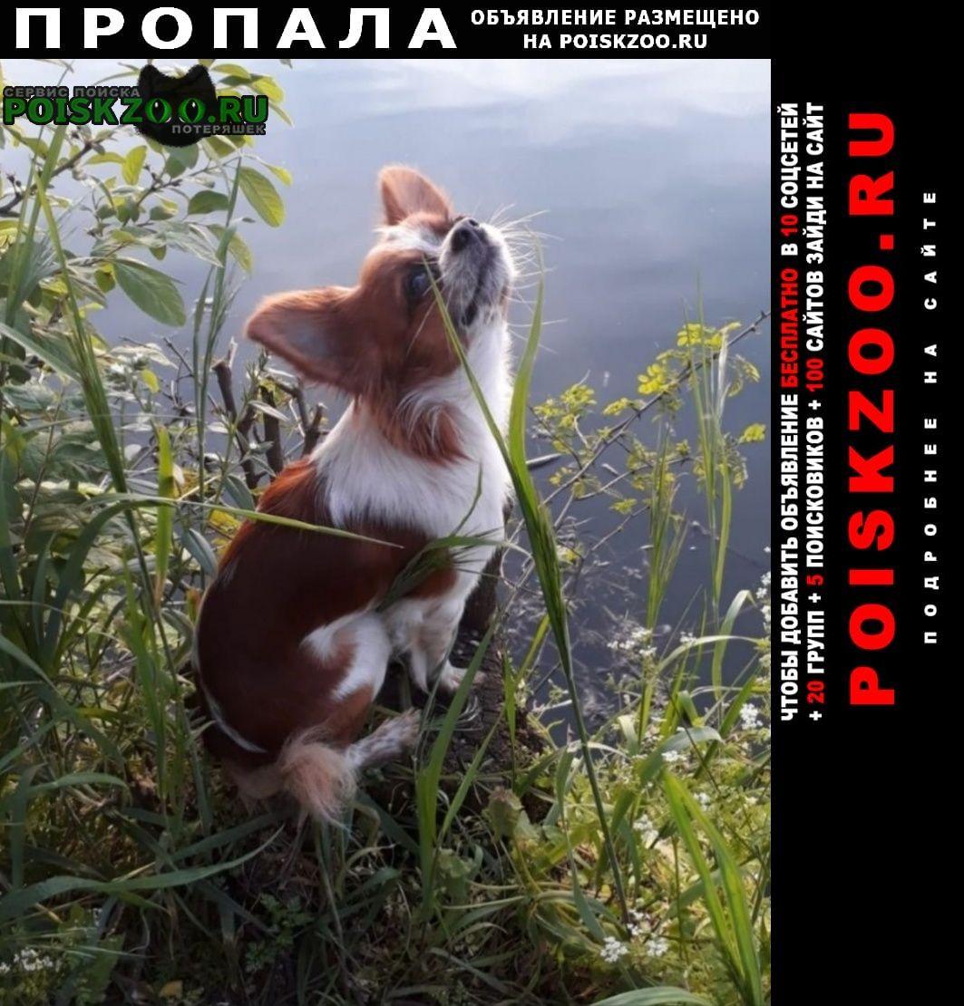 Пропала собака в станице динской Краснодар