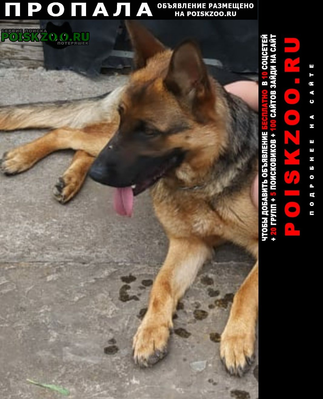 Батайск Пропала собака немецкая овчарка