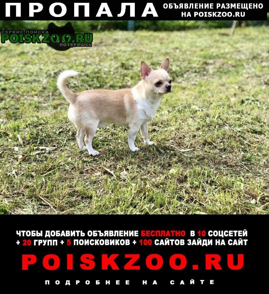 Пропала собака кобель, кличка тоша Щелково